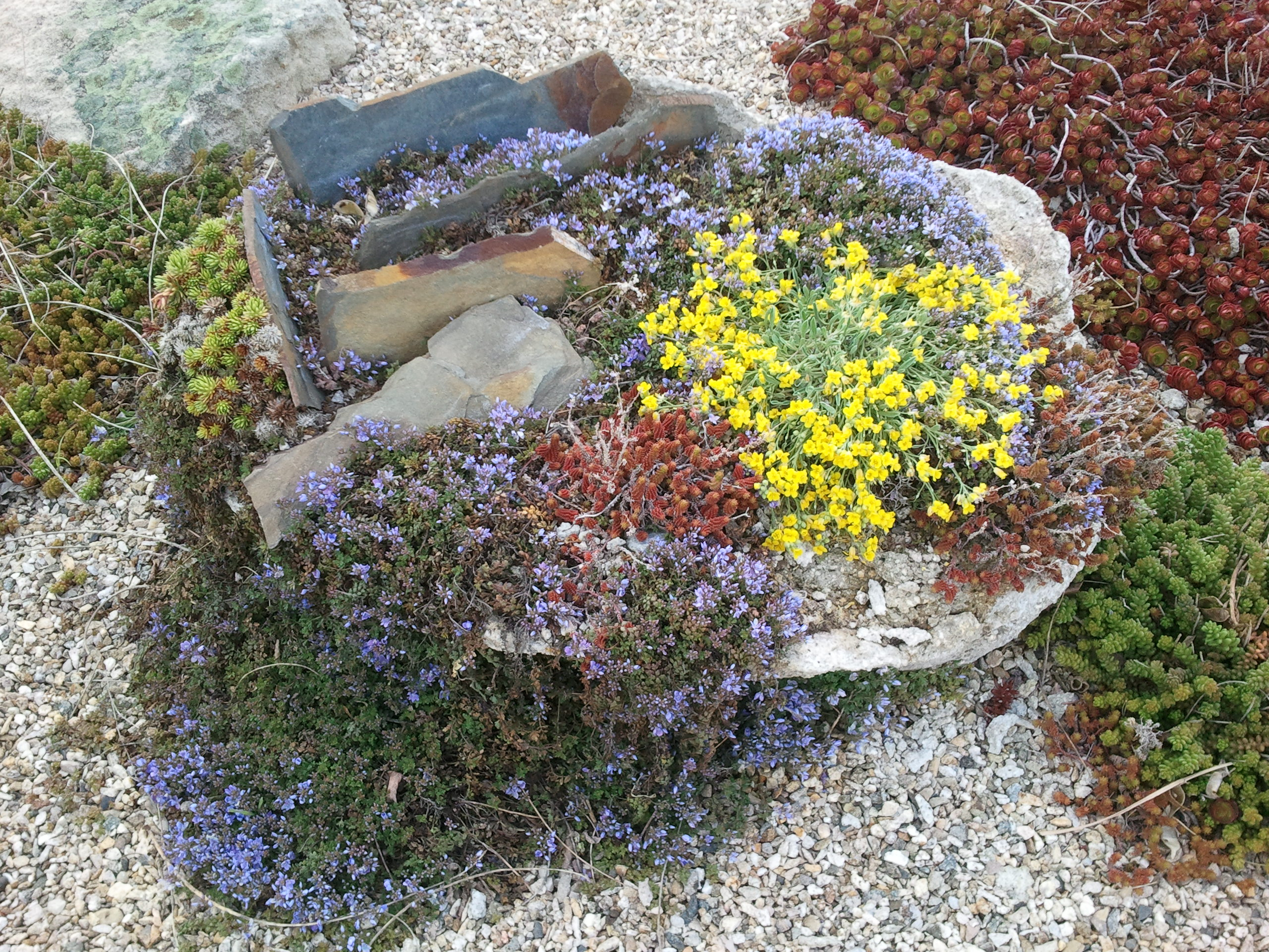 Rock gardens an introduction awkward botany for Jardin plante