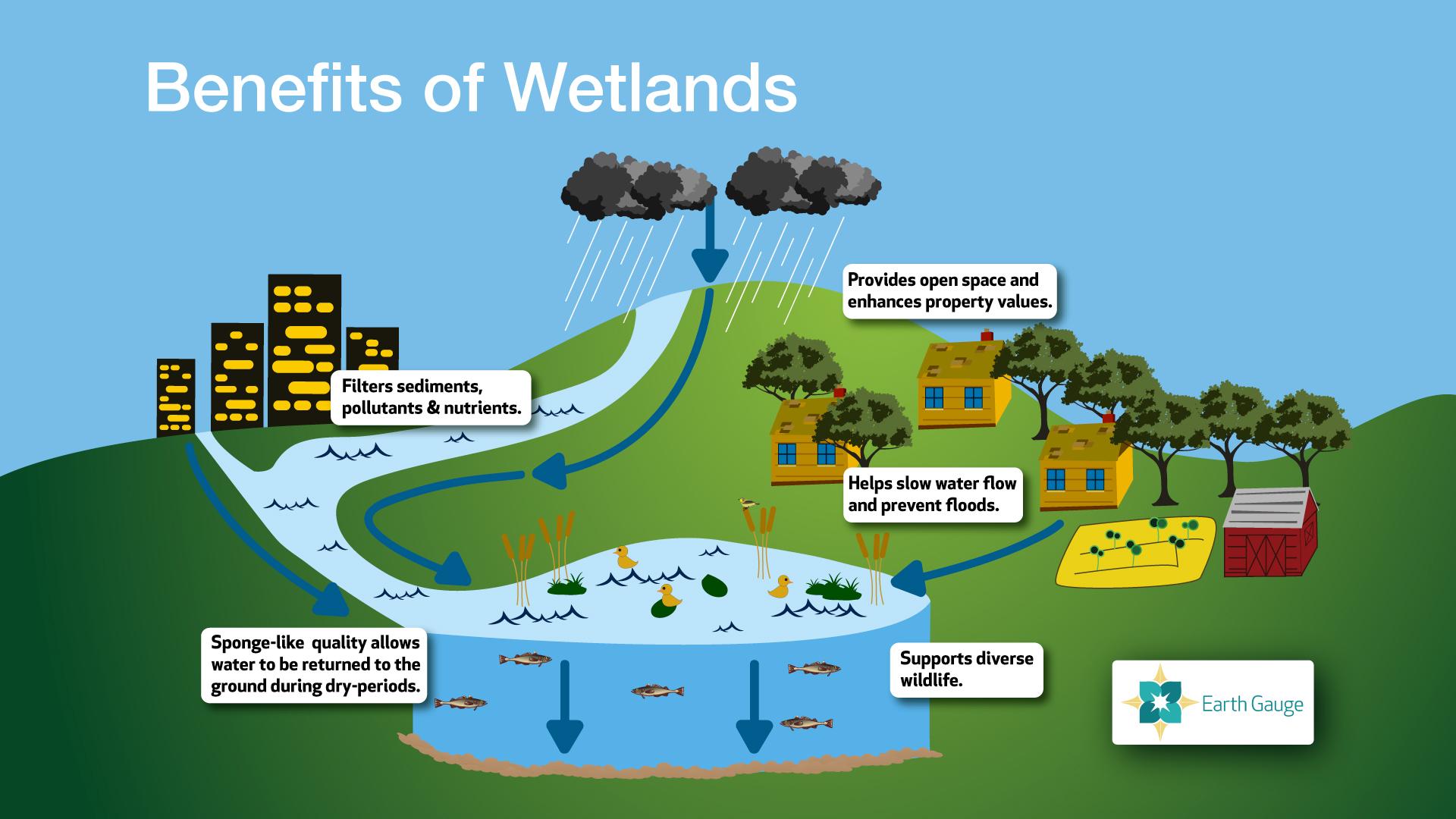 Wetlands! – awkward botany