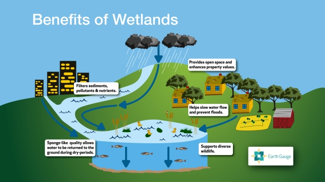 wetland benefits