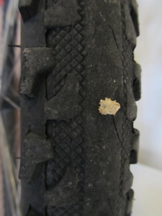 puncture vine_1