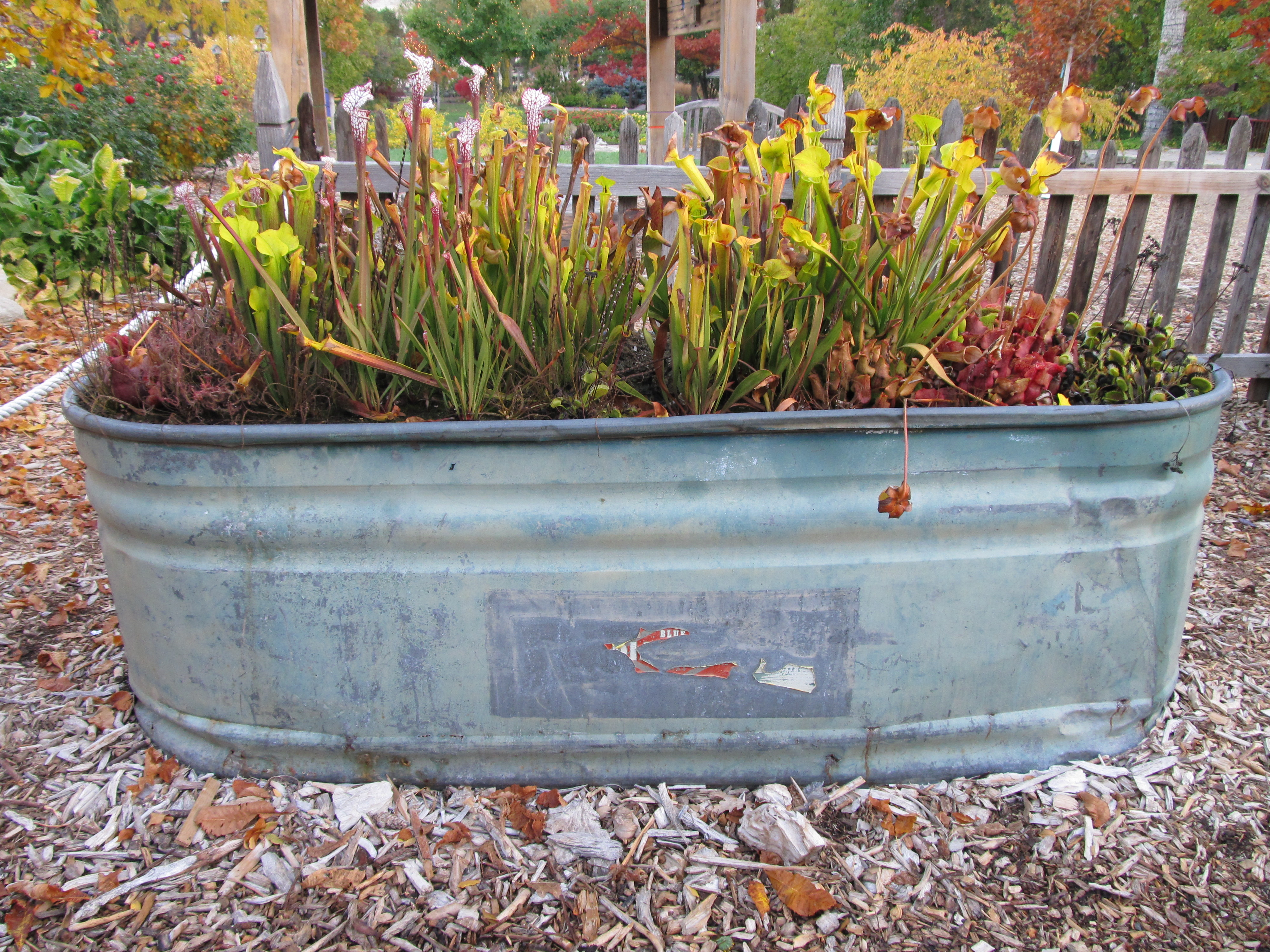 how to make carnivorous bog container garden