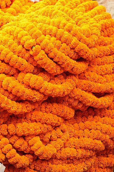Marigold Garlands (photo credit: wikimedia commons)