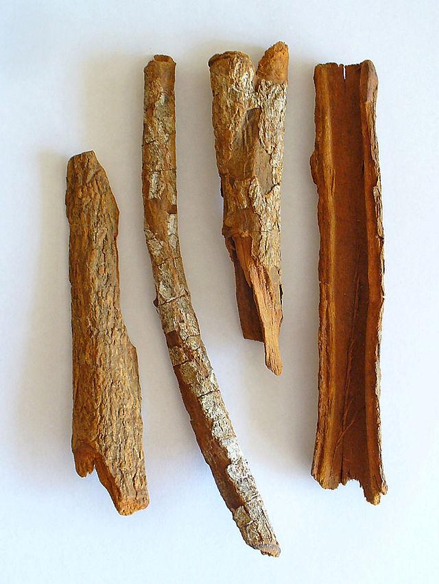 Bark of Cinchona officinalis (photo credit: wikimedia commons)