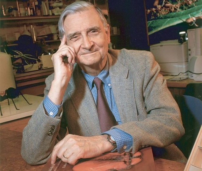 Edward O. Wilson (photo credit: Wikimedia commons)