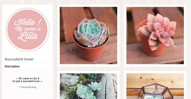 Succulent Blogs On Tumblr Awkward Botany