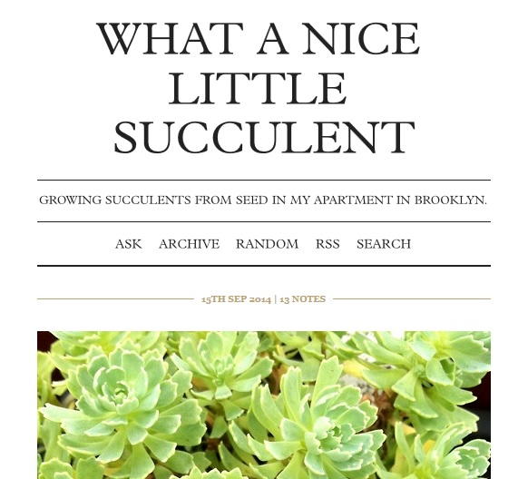 what a nice little succulent
