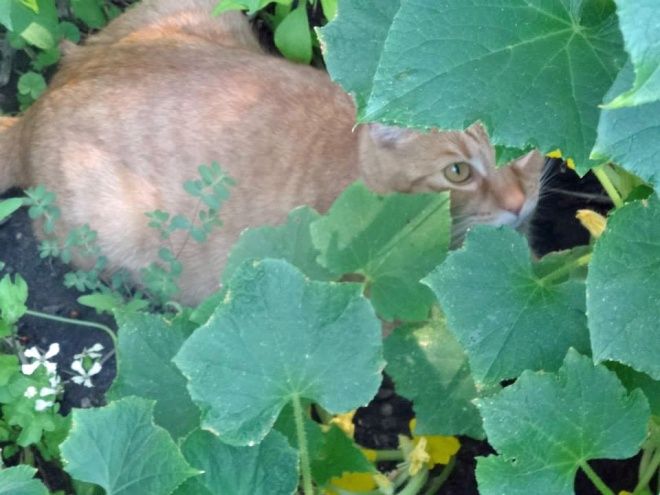 Even the cat loves being in the garden...
