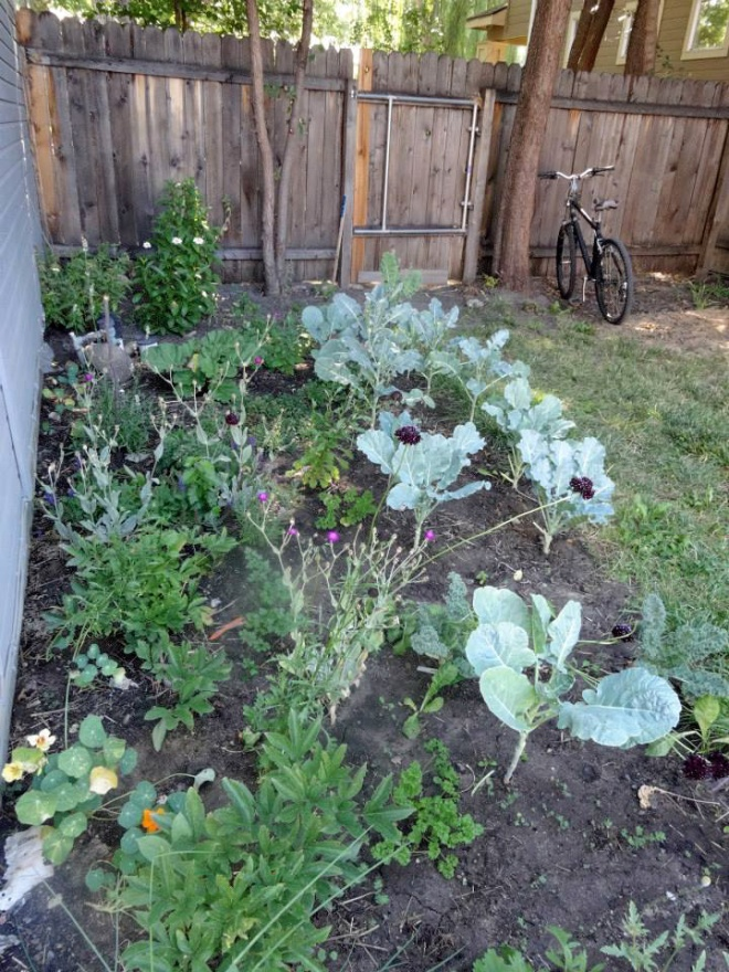A view of our side yard. It is pretty shady in this section of the yard but we were still able to grow kale and collards along with several different flowers and herbs.