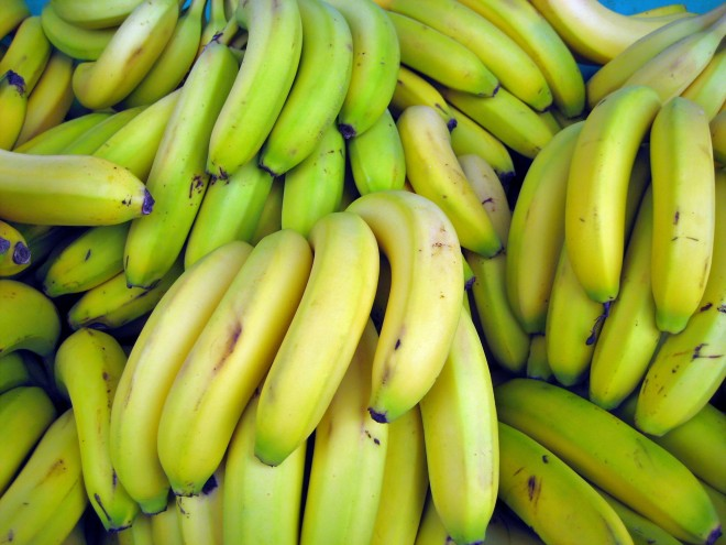 """Despite the remarkable phenotypic and genotypic diversity in bananas,"" the Cavendish banana is responsible for the ""vast majority"" of banana production. (photo credit: wikimedia commons)"