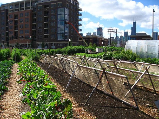 Urban Farm in Chicago, Illinois (photo credit: wikimedia commons)