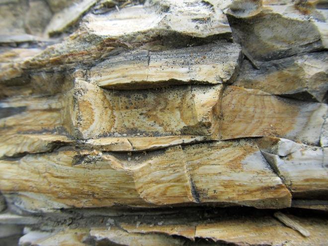 petrified log 1