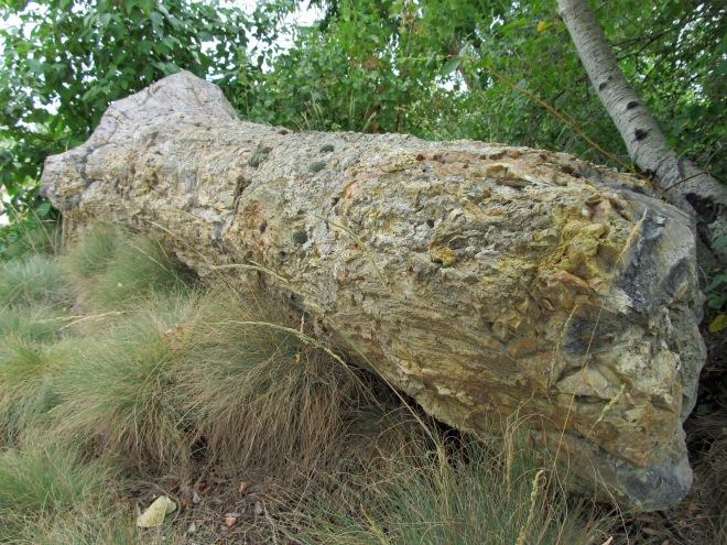 petrified log 2
