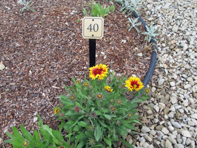Blanket Flower (Gaillardia x grandiflora 'Goblin') Plants in the garden are accompanied by a sign with a number on it. The sign corresponds to the plant list that is provided at the entrances to the garden.