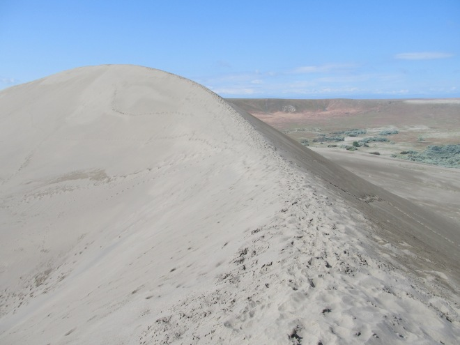 Traversing the spine of a brontosauras (aka sand dune).