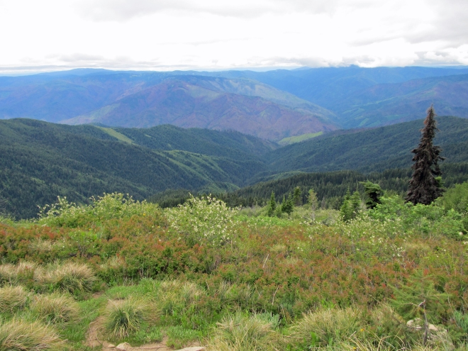 A view from Coolwater Ridge Lookout trail. Looking down at the Selway River Canyon.