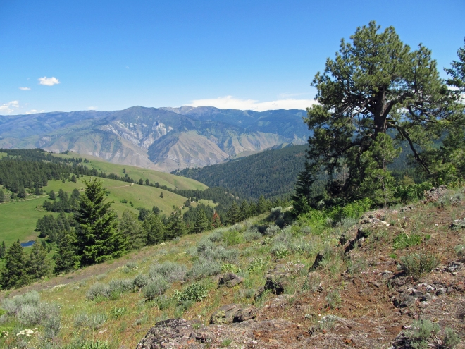 On cow creek saddle looking towards Salmon River canyon