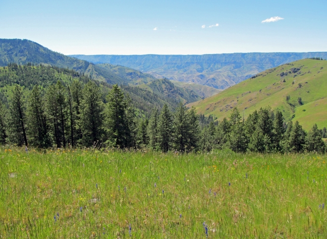 On cow creek saddle looking towards Snake River canyon