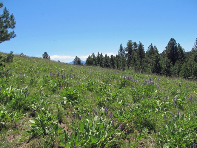 A view across the meadow at Mud Springs Ridge