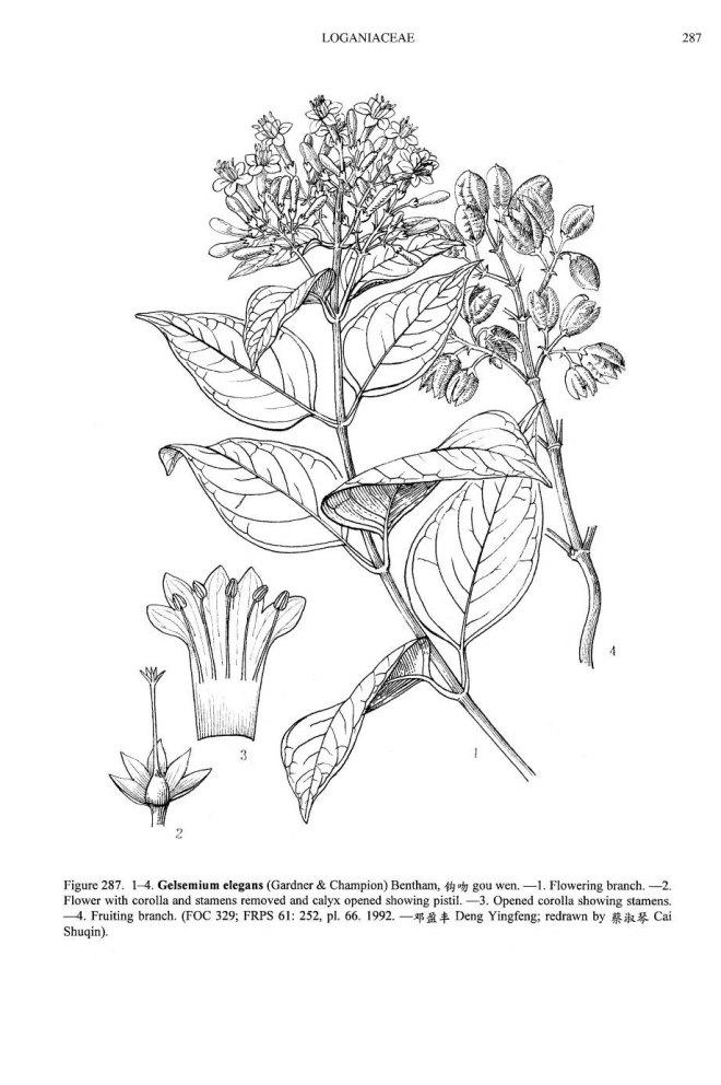 Gelsemium elegans (image credit: Flora of China)