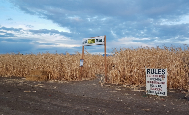 Entering the corn maze at The Farmstead in Meridian, Idaho