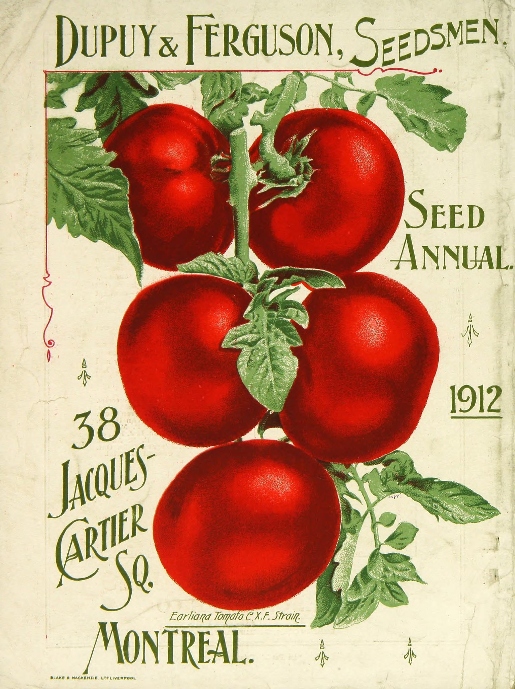Tomato vs. Dodder, or When Parasitic Plants Attack – awkward botany