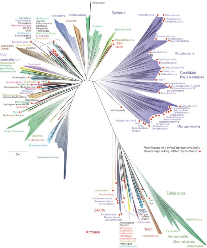 Current representation of the tree of life. Microorganisms clearly dominate. (image credit: nature microbiology)
