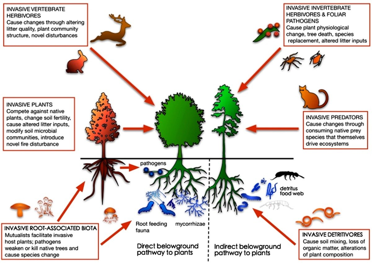 the effects of predators on different kinds of ecosystems Changing climate affects ecosystems in a variety of ways  thus removing  predators or prey that are critical in the existing food chain climate change not  only affects ecosystems and species directly, it also interacts with other.