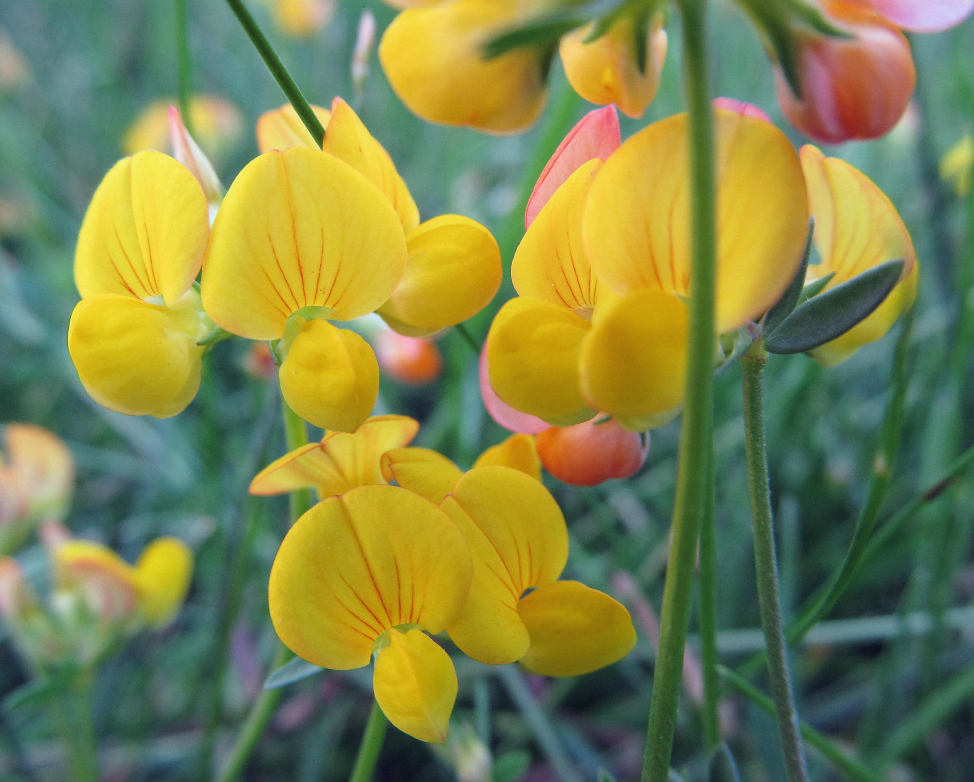 urban weeds – awkward botany