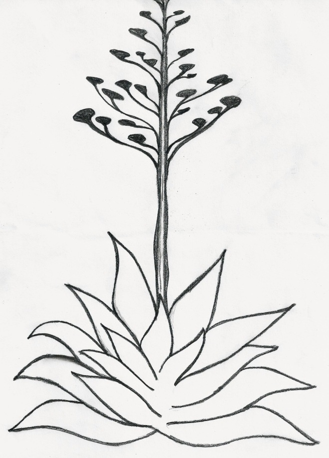 Clare Walker Leslie Guide To Sketching Trees Ebook PDF ...