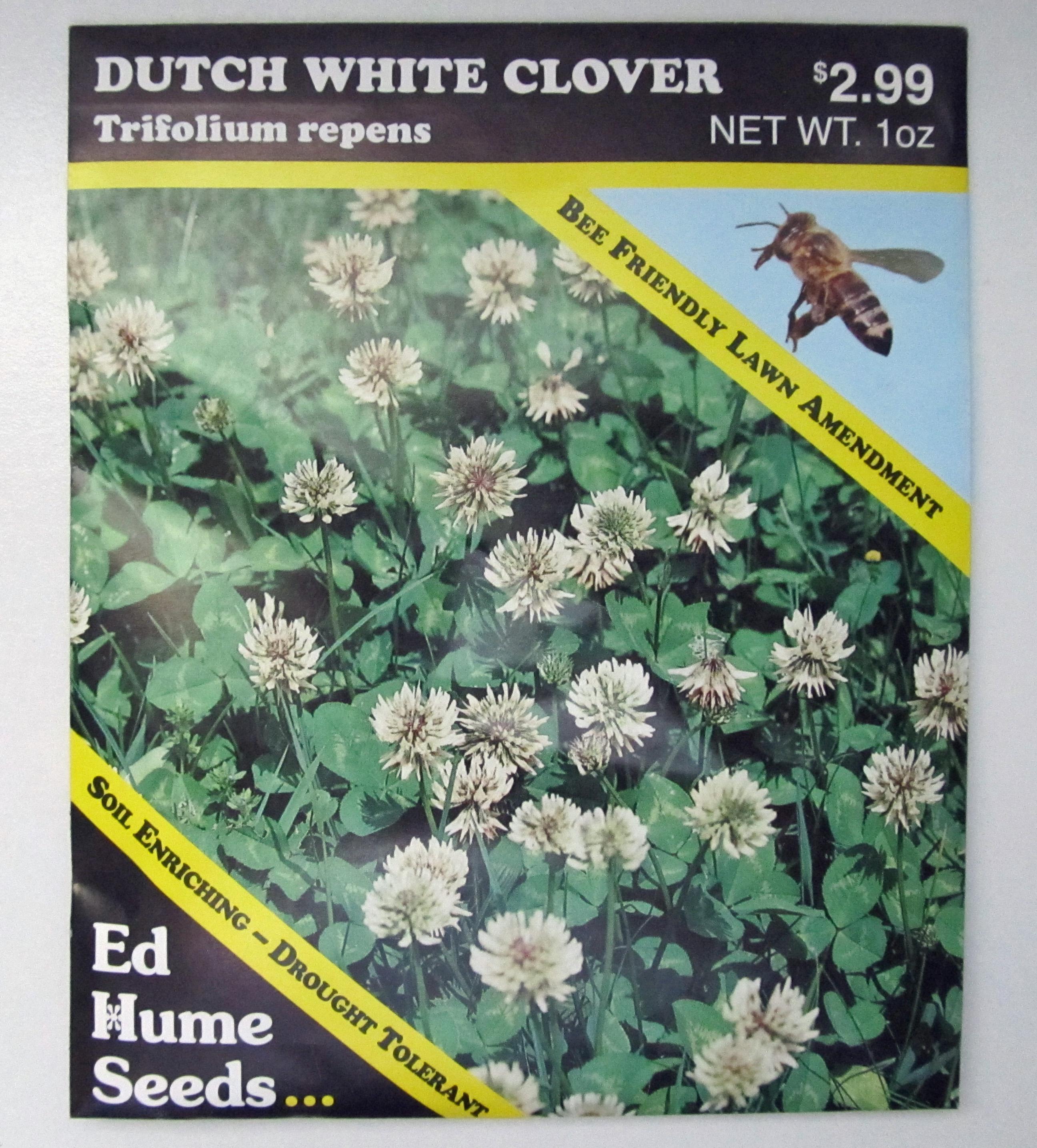 Eating Weeds Clovers Awkward Botany